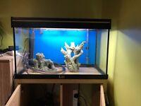 Aquamanta 125l fish tank
