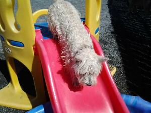 Doggy Daycare and Kennel-Free Boarding Services St. John's Newfoundland image 3