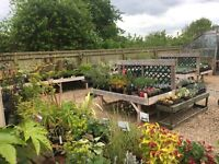 Retail Plant Nursery for sale. Well established family run business