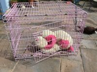 """Pet Cage. Pink. Folds flat. Very secure with 3 lockable doors. 36"""" length (large), removable tray."""