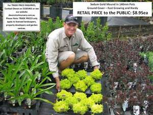 1000s of PLANTS FOR SALE - Great GIFT IDEA - From $8.95 HS093 Tallai Gold Coast City Preview