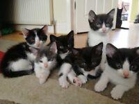 6 lovely kittens for sale
