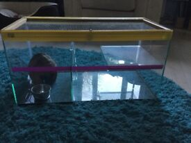 Glass Gerbilarium, two compartments, small ladder, can't be chewed
