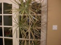 MATURE INDOOR PLANTS AND POTS