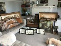 Antique job lot of taxidermy