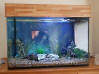 Bare fishtank for sale