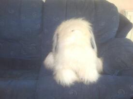 "Dulux Dog, Old English Sheepdog Approx 20"" Tall"