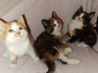 4x kittens.