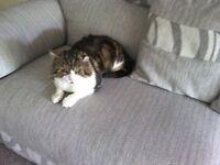 FOUND Tom cat Newthorpe