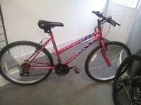 Ladies Push Bike - 19 Inch Frame