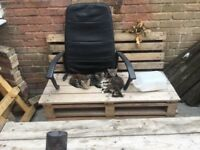 3femals Bengal kittens for sale and a male
