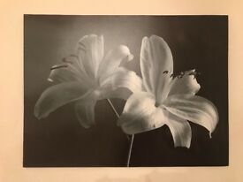 Large Flower Painting