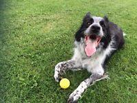 Walkies - dog walker/pet sitter operating in West Bridgford + City Centre