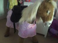 **reduced** Butterscotch pony
