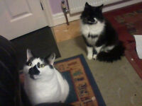 Two Cats That Need Re-homing. No Cost. Comes With Lots of Wet and Dry Food & a Cat Carrier