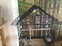 Budgie Parrot cage with stand and one female budgie