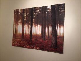 Large Next Forrest Canvas Picture