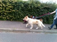 Dog walking and Pet sitting Service & Boarding Service part or full