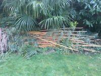 FREE Garden Bamboo Canes