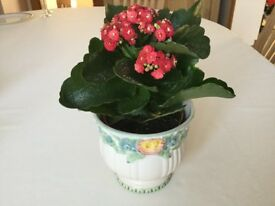 Pretty Marks and Spencer Footed Planter - Size 10cm in Very Good Condition