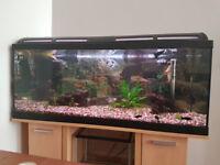 Aquarium / fish tank 160 L excellent condition with stand
