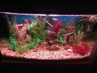 Aqua One 850 Fish Tank