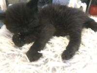 Very adorable kittens Ready for loving playful homes