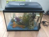 Beautiful fish tank/aquarium with cabinet