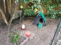 Chicken Coop (plastic), 3 Warren hens & complete set-up