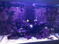 Marine Tank w/ Live rock, coral and fish