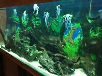 Jewel fish tank with all fishes and accessories