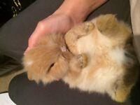 Baby bunny rabbits 🐰🐰🐰super quite❤️£35