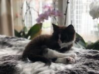 A beautiful kitten is looking for a new home