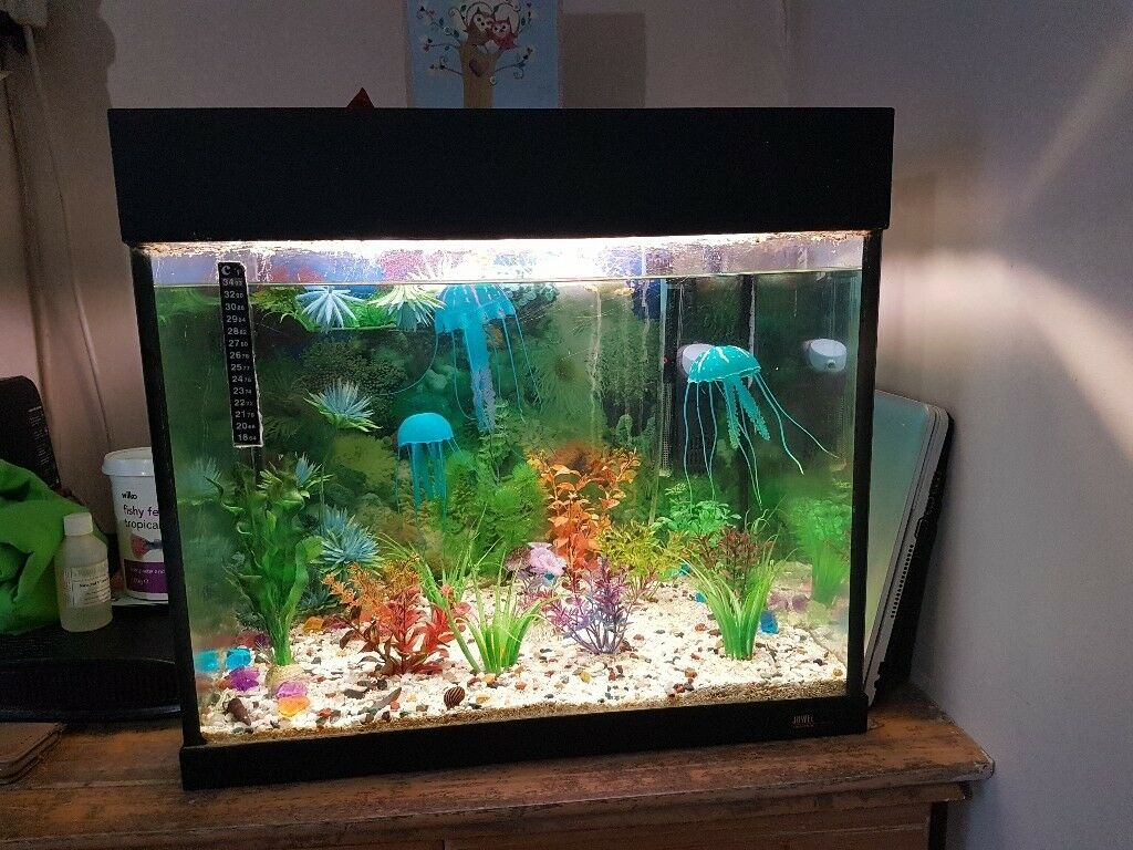 Tropical fish tank 90 litres in barking london gumtree for Exotic fish tanks