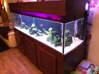 Fish tank aquarium