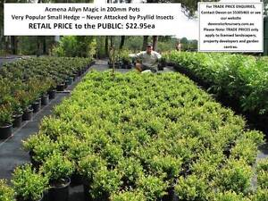 Need SMALL PLANTS that Grow to 1 Metre or Less? Look Here! HS103 Tallai Gold Coast City Preview