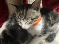 beautiful litter of kittens - 2 LEFT
