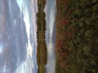 40 acres land for rent for cattle