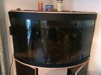 Large Corner Aquarium with stand and all equipment