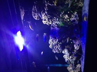 Aquarium ocean reef rock