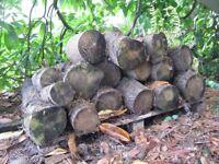 Seasoned Logs Stack 1