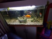 Fishtank plus fish