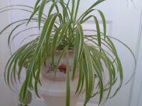 Large Plant / Chamber Pot