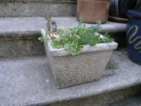 Square Concrete Alpine Garden With Plants etc Weymouth