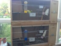 Budgies breeding cage