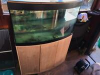 Fluval 3 foot bow fronted fish tank