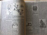 Encyclopaedia Britannica 1953