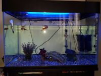 Fish with tank & cabinet all accessories included