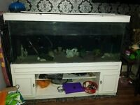 Fish tank setup 5 ft 450 litres Bargain. Fully water tight/ no fish included