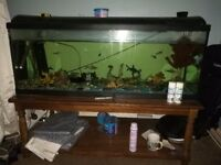 Fish tank and wooden table